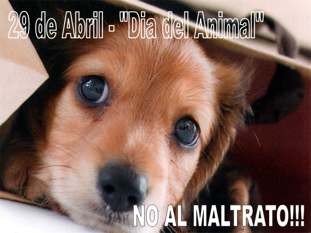 NO_AL_MALTRATO