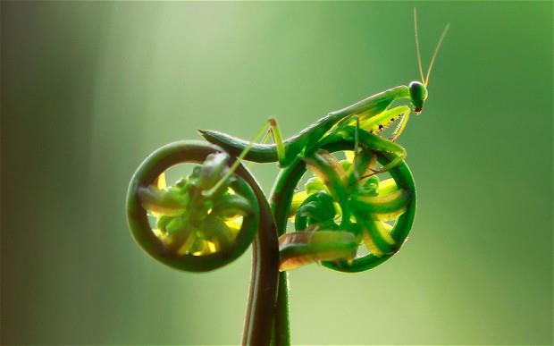 dia-mundial-de-la-bicicleta[1]