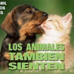 Nuestro deber respecto de los animales