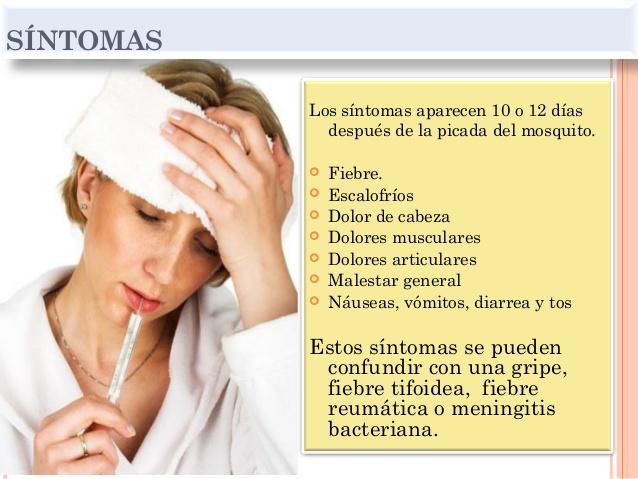 malaria-o-paludismo-adultos-dr-enmanuel-hernandez-reyes-10-638