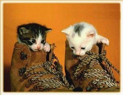 mascotas-gatitos-tiernas-dia-del-animal