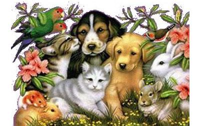 mascotas01