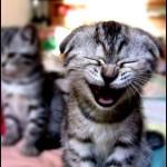 Algunos eventos en el dia de la risa
