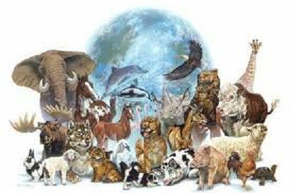 Dia-Internacional-de-la-biodiversidad
