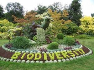 dia-internacional-de-la-biodiversidad-300x225
