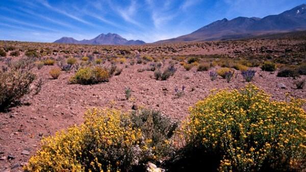 Dia_Mundial_de_Lucha_contra_la_Desertificacion_y_la_Sequia._La_ONU_la_considera_una_amenaza_mundial