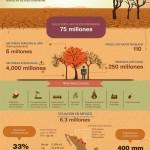 Luchando contra la desertificación
