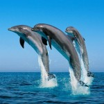 Imagenes del concurso por el Dia de los Oceanos
