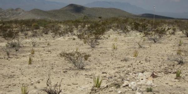 lucha-contra-desertificacion-1024x768