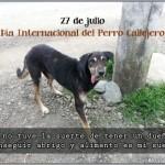 27 de julio – Día Internacional del Perro Callejero