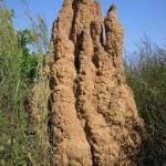 Imágenes de hormigueros como obras arquitectónicas