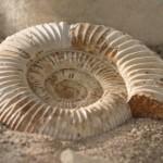 Restos paleontológicos más grandes
