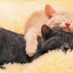 Imágenes de gatos durmiendo plácidamente