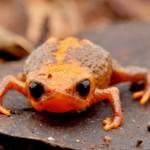 Nueva especie animal descubierta