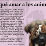 Postales del Día del Animal para compartir: Todo imágenes de animales para descargar