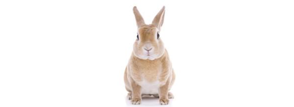 conejos-enfermedad-virica
