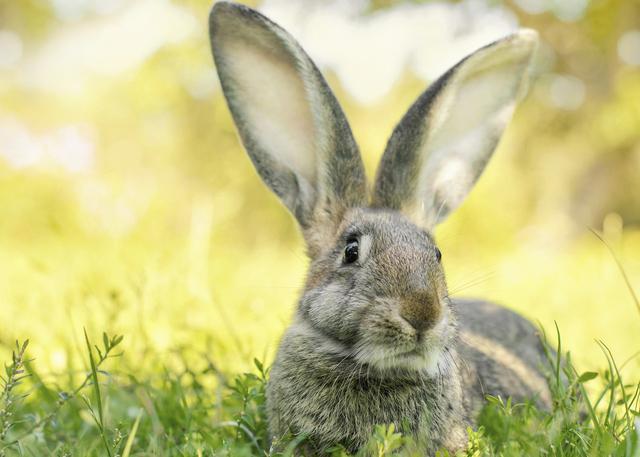 conejos6-mitos-sobre-los-conejos-que-necesitas-conocer