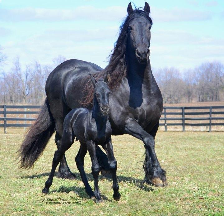 yegua150409-foto-fotografias-caballo-imajen-corcel-yegua-imagen-potro-potrillo