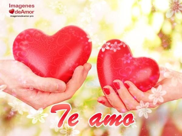 amor35