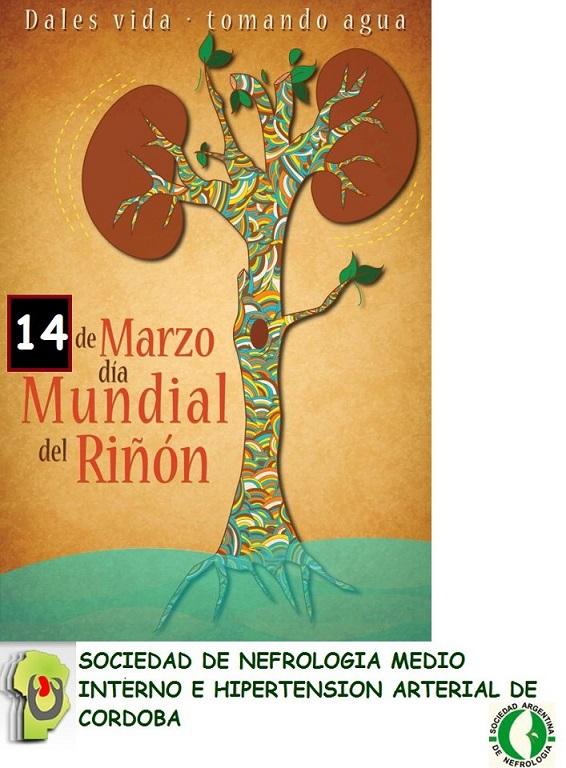 riñon7