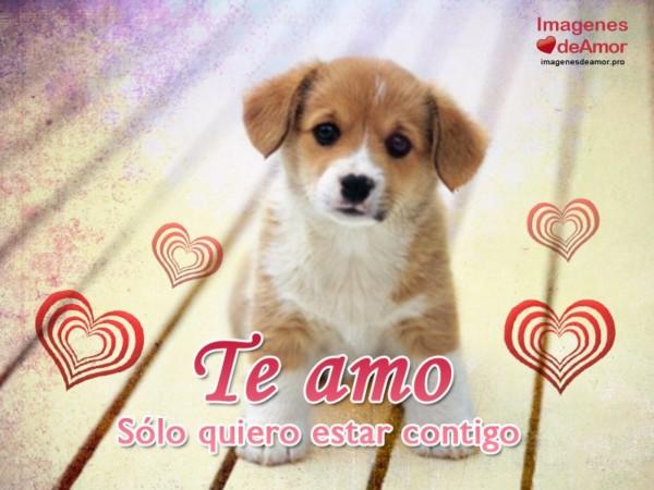 amor31