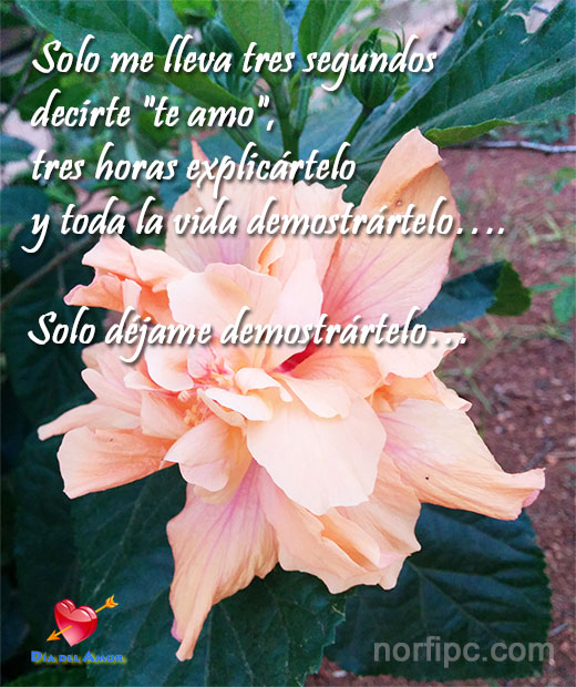 amor32