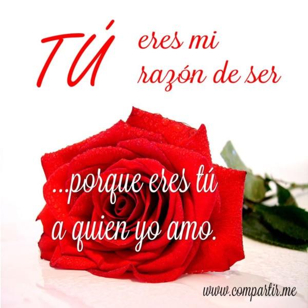 amor48