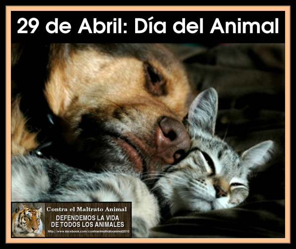 animal5