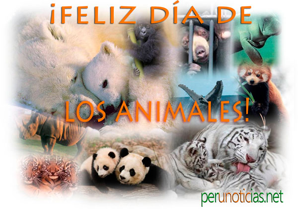 animalfeliz1