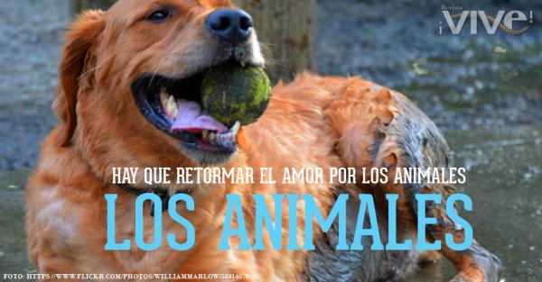 animalfrase.jpg18