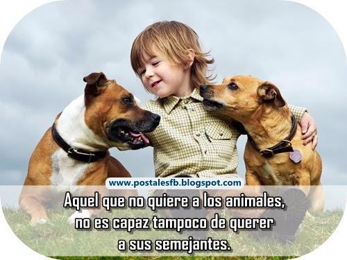 animalfrase10