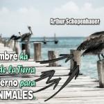 Imágenes con mensajes de reflexión sobre el amor y la fidelidad de los animales para compartir este Día del Animal