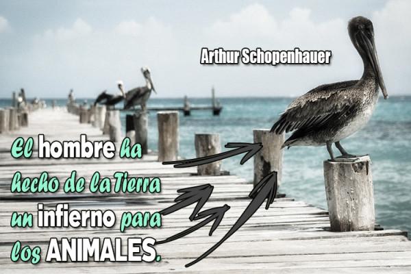 animalfrase30