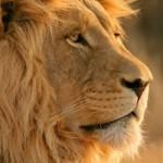 Hermosas imágenes de animales salvajes y domésticos para Fondos de Pantalla