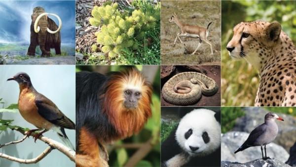 biodiversidad.jpe24