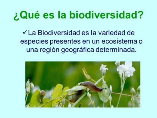 biodiversidadinfo.jpe2