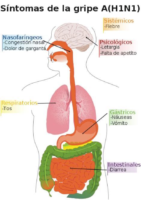 gripe.sintomasgif.jpg1