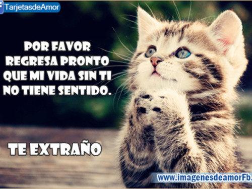 TeExtraNo15