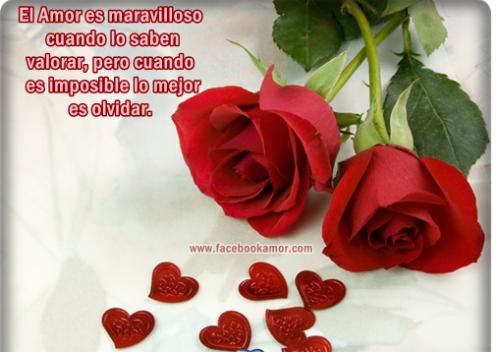 bellasflores10