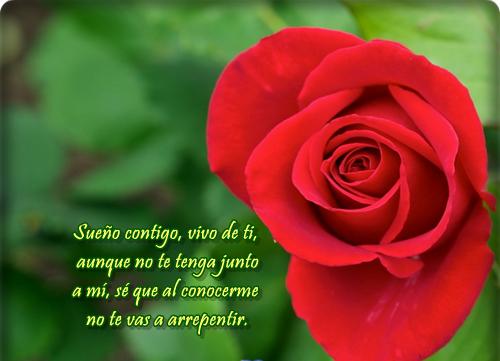 bellasflores27