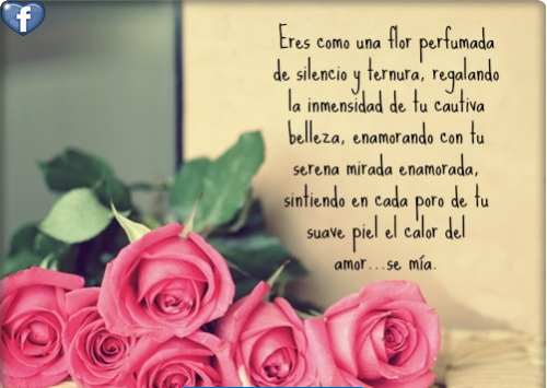 bellasflores29
