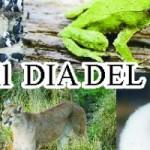 Eventos a los que podremos asistir en el dia del animal