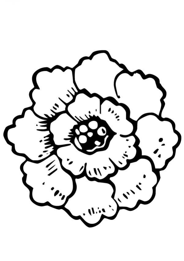 flor-n-18-52663