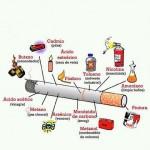 Quien organiza el Dia Mundial Sin Tabaco?