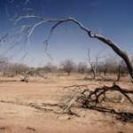 Campaña de la ONU contra la Desertificacion