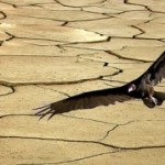 Las Naciones Unidas y el Dia contra la Desertificación
