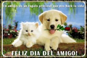 amigofrase5