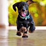 Las mejores imágenes del perro más divertido