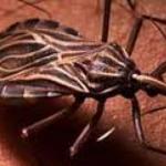 """Qué es el """"Mal de Chagas?"""