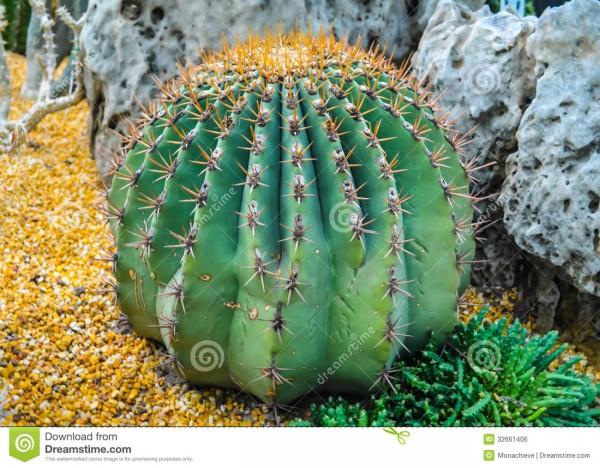 C ctus una particular planta todo im genes for Fotos de cactus